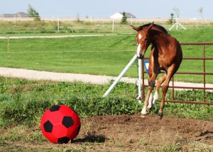 Hover horse, meet ball.