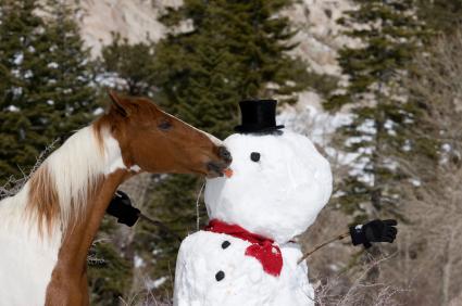 Christmas-Horse-1